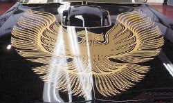1981 Trans Am Decal Kit Complete