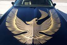 1981 Turbo Trans Am Decal Kit Complete